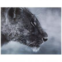 Картина без рамы 40х50 см «Дикая львица»