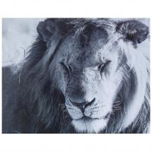 Картина без рамы 40х50 см «Дикий лев»
